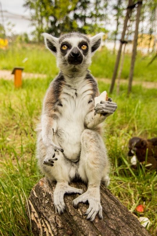 Ráj lemurů, autor: Pavel Vlček